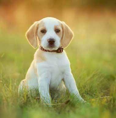 pro breeds dog food